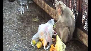 Naša najboljša prijateljica opica.avi
