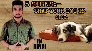 5 Signs :- That Your Dog Is Sick (In Hindi) By Dog N Dogs