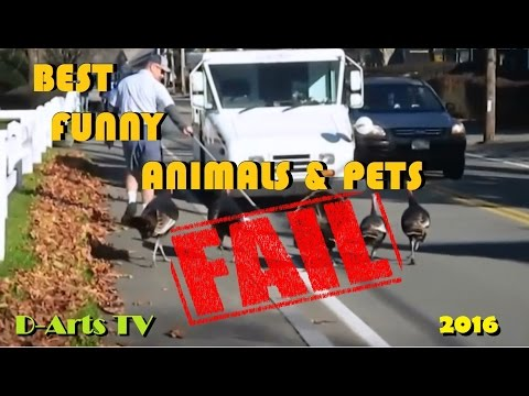 BEST FUNNY ANIMALS & PETS FAILS 2016