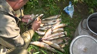 Рыбалка на реке аргунь забайкальский край