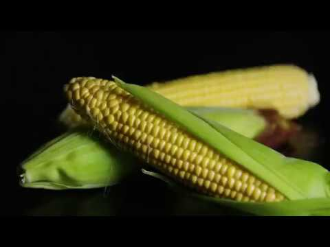 Kinoglaz - Corn