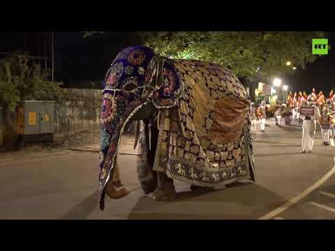 Elegant elephants join Navam Perahera parade in Sri Lanka