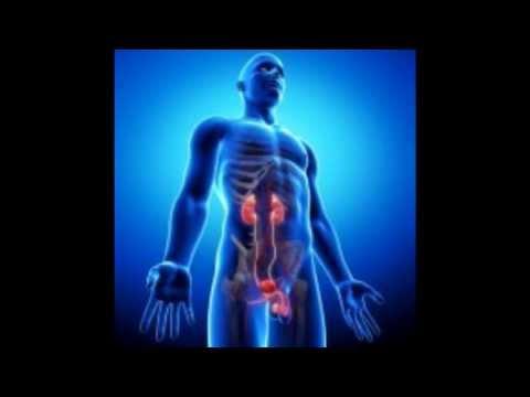 Chaga trattamento fungo di prostatite