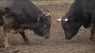 Artvin'de 200 yıllık gelenek yok olma tehlikesiyle karşı karşıya