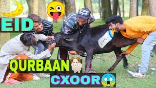 Eid Qurbaan Cxoor Funny Video By Kashmiri rounders