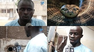 Yéw🐍 à Guédiawaye : Découvrez comment ce serpent vit dans la chambre des talibés