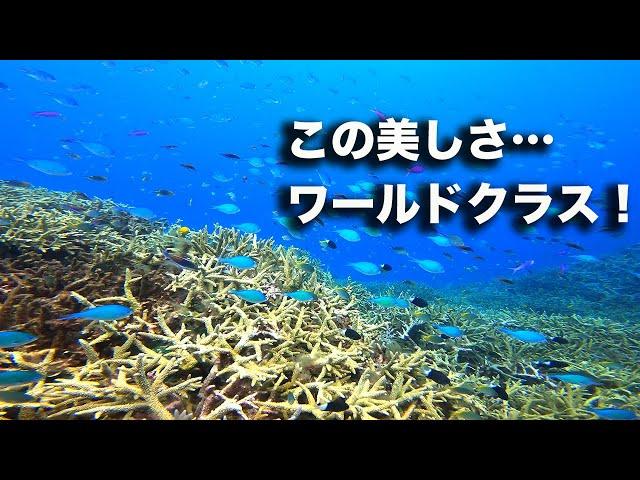 どこまでも果てしなく続く美しきサンゴ礁でダイビング!|ビーチライフ石垣島