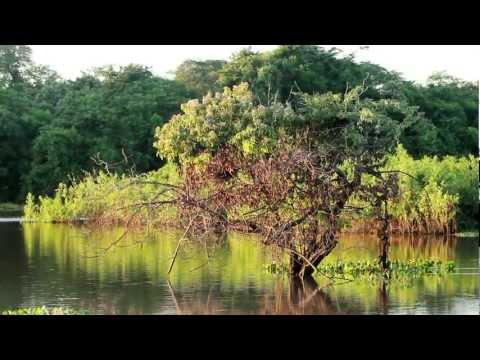 Natureza: Como é lindo o nosso Pantanal!