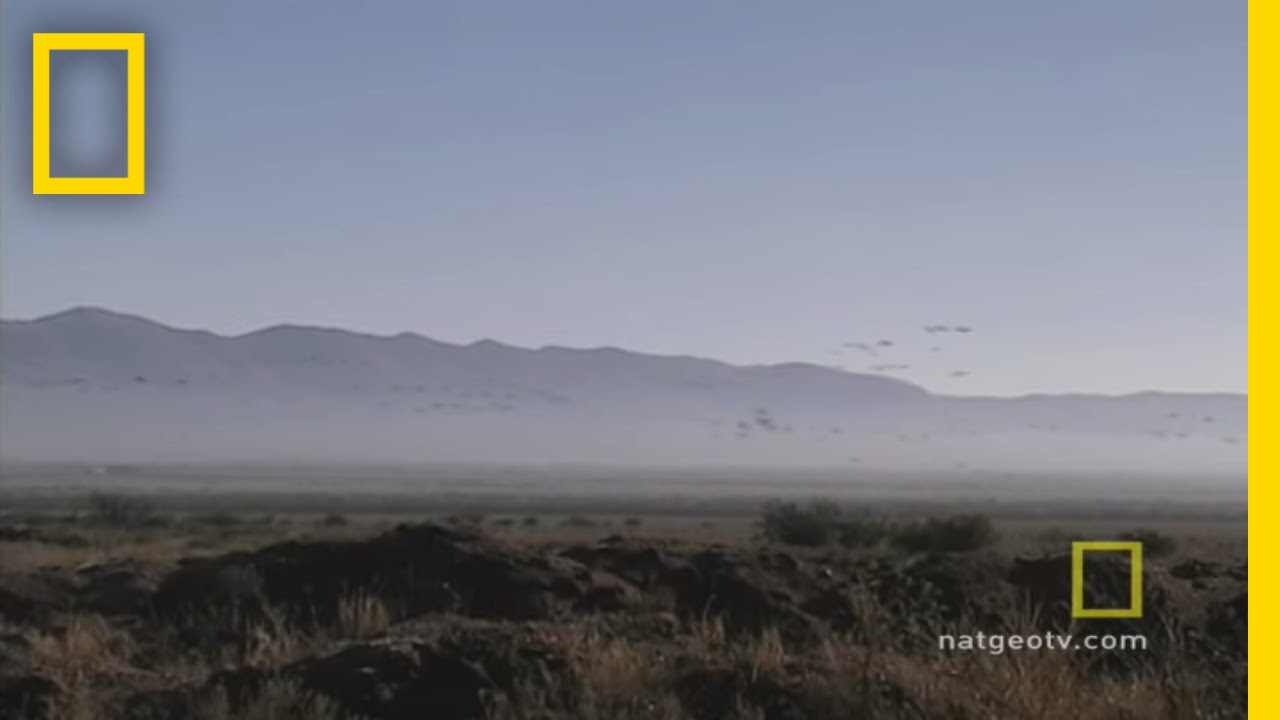 Masters of Migration | National Geographic thumbnail