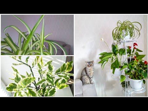 Мои комнатные растения в марте 2020 / Обзор комнатных растений