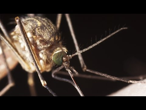 Safer Insect Repellents That Work | Consumer Reports