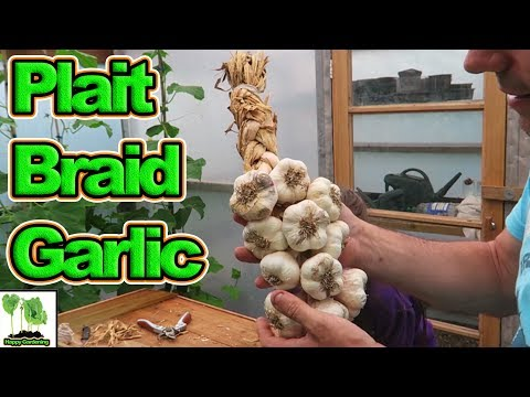 Download How To Plait Or Braid Soft Neck Garlic Bulbs  Easy Step By Step Method HD Mp4 3GP Video and MP3