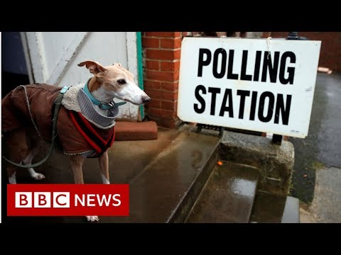 General election 2019: A tale of #DogsAtPollingStations  - BBC News