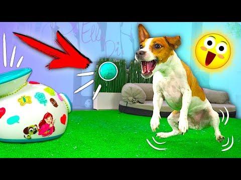 Kung ang mga worm puppy kung kaya kong abutin