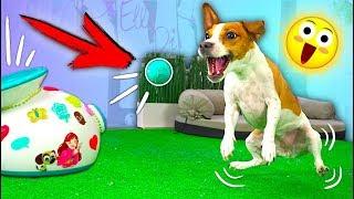 ПУШКА ДЛЯ СОБАКИ РЕАКЦИЯ НА ПОДАРОК ЧТО ТО ПОШЛО НЕ ТАК   Elli Di Pets
