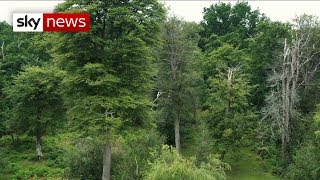 Climate change: UK 'needs one billion trees'