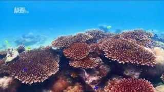 Чудеса голубой планеты -  Африка