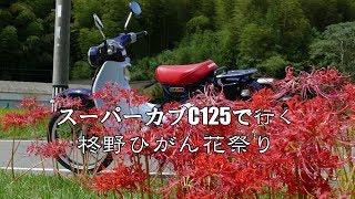 スーパーカブC125で行く柊野ひがん花祭り