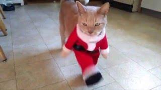 animale faza comica pisica vestimentatie
