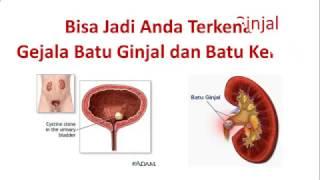082242245843 Jual Obat Batu Ginjal tanpa operasi di Jayapura...