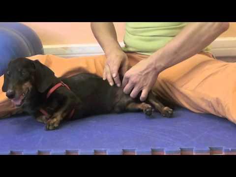 Anestetizzare pomata per dolori articolari