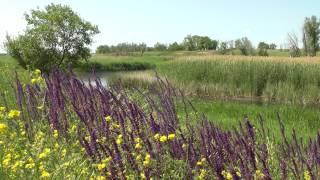 birdsong, steppe flowers, river .. пение птиц, степные цветы, речка