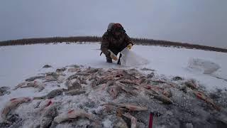 Зимняя ловля окуня в якутии