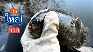 ตกปลาหมอ หมายธรรมชาติใกล้บ้าน / บ้านนอก EP.40