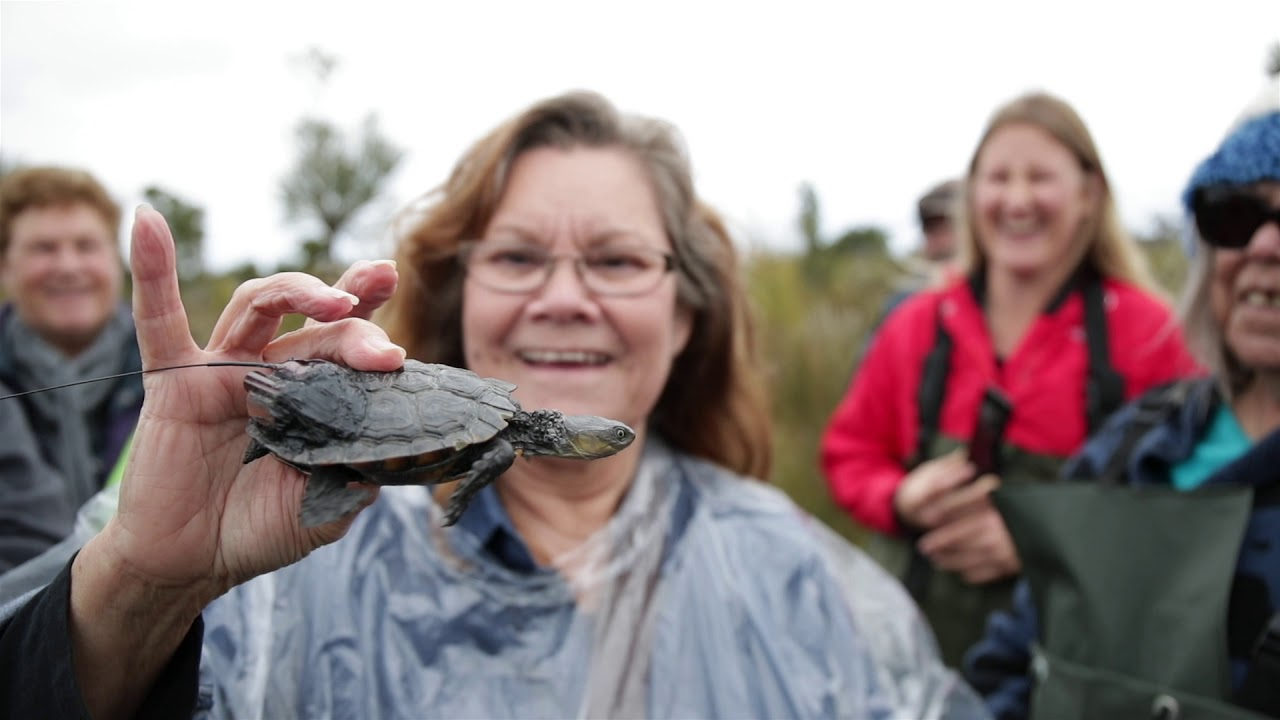 Testing a new place for Western Swamp Tortoises in a changing climate