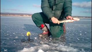 Рыбалка зимняя в забайкальском крае