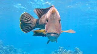 Scuba Diving at the Great Barrier Reef, Australia (Saxon Reef, 04/09/2019)