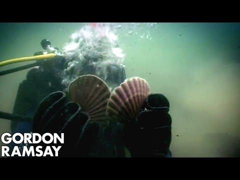 Gordon Ramsay Goes Hand-Diving for Scallops