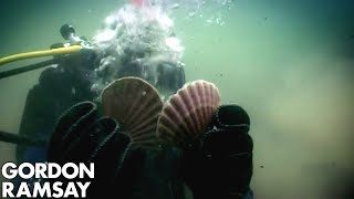 Hand-Diving for Scallops - Gordon Ramsay