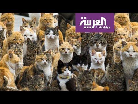 العرب اليوم - شاهد: جزير القطط في اليابان يعيش فيها نحو 15 شخصًا فقط