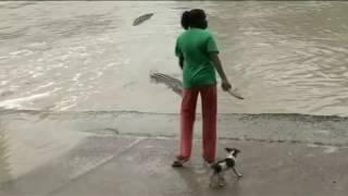 Как прогнать крокодила