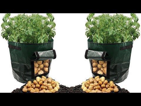 Wie du Kartoffeln ganz einfach in einem Plastiksack anbauen kannst!