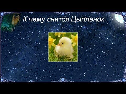 К чему снится Цыпленок (Сонник)