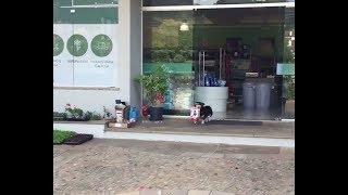 Собака сама ходит в магазин за кормом для себя, кота и попугая