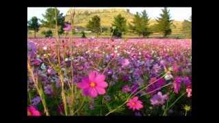 DOLLY  PARTON   Wild flowers.wmv