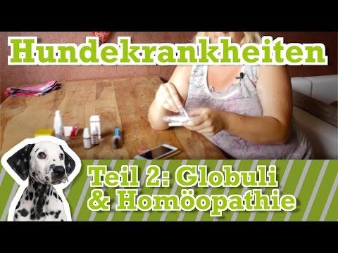 Hundeapotheke Teil 2:  leichte Hunde Krankheiten mit Globuli & homöopathischen Mitteln behandeln