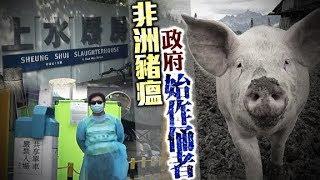 東方日報A1:政府防疫失魂 驗漏非洲豬瘟