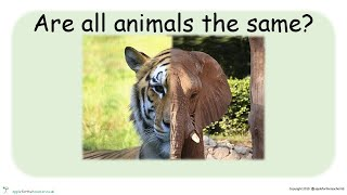 KS1 P4C Lesson on Animals