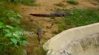 Muta Crocodile Centre, Ranchi