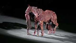 Edinburgh Tattoo 2013 - War Horse