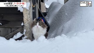 Vol.97「にゃん旅鉄道」寒くても頑張るにゃ!