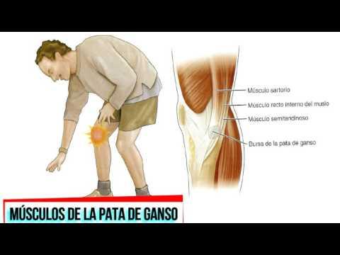 Zimmer prótesis para reemplazo de rodilla