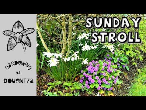 Sunday Morning Stroll & Gardening Chat - spring at Douentza