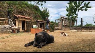 GELMİŞ GEÇMİŞ EN GÜZEL KANGAL KULÜBESİ :)) #kangal #malaklı #dogoargentino #canecorso #jackrussell