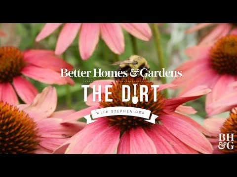 Plants That Support Pollinators | The Dirt | Better Homes & Gardens