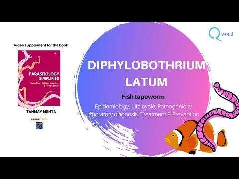 Helminth dirofilaria kezelés